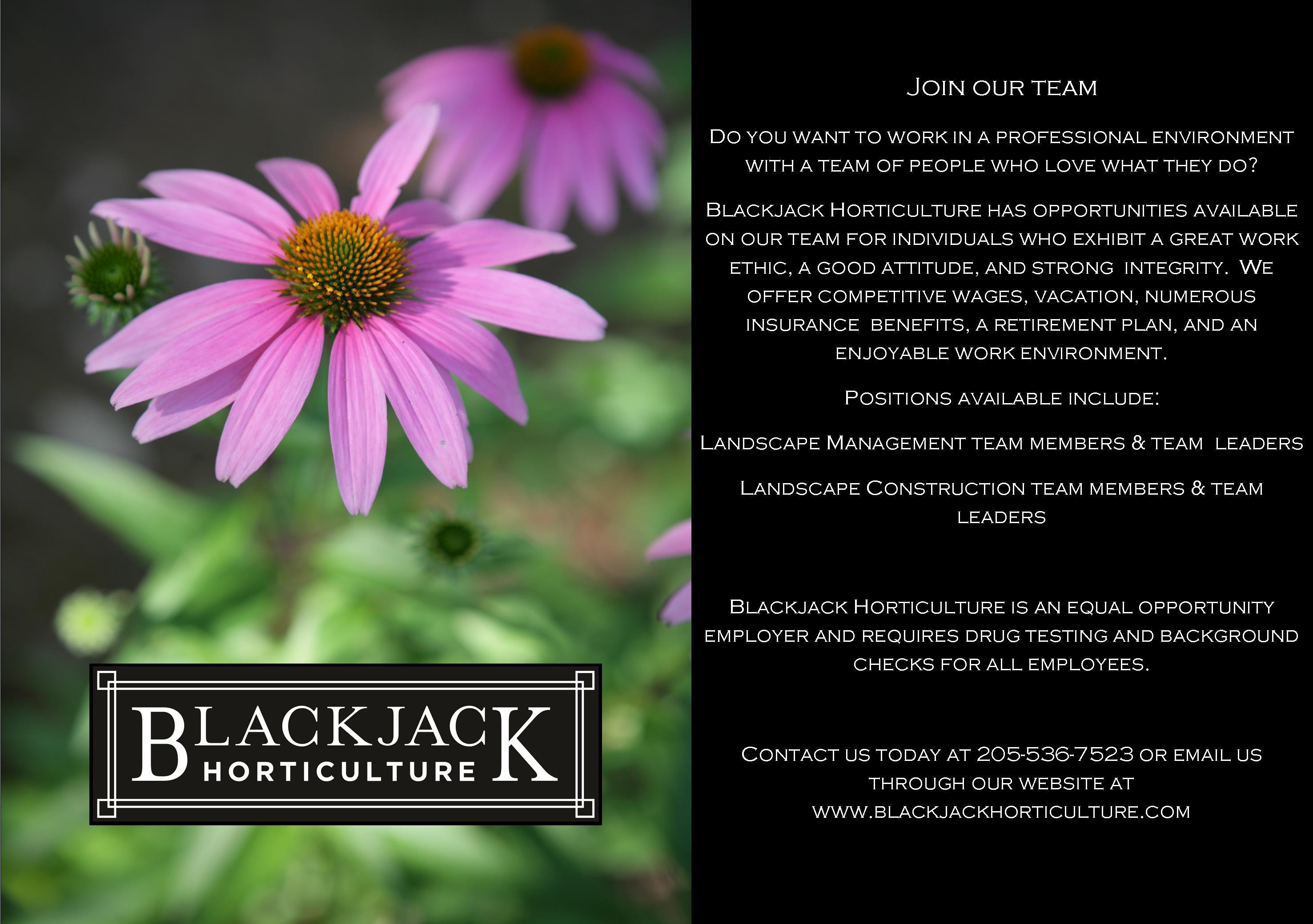 Blackjack employment